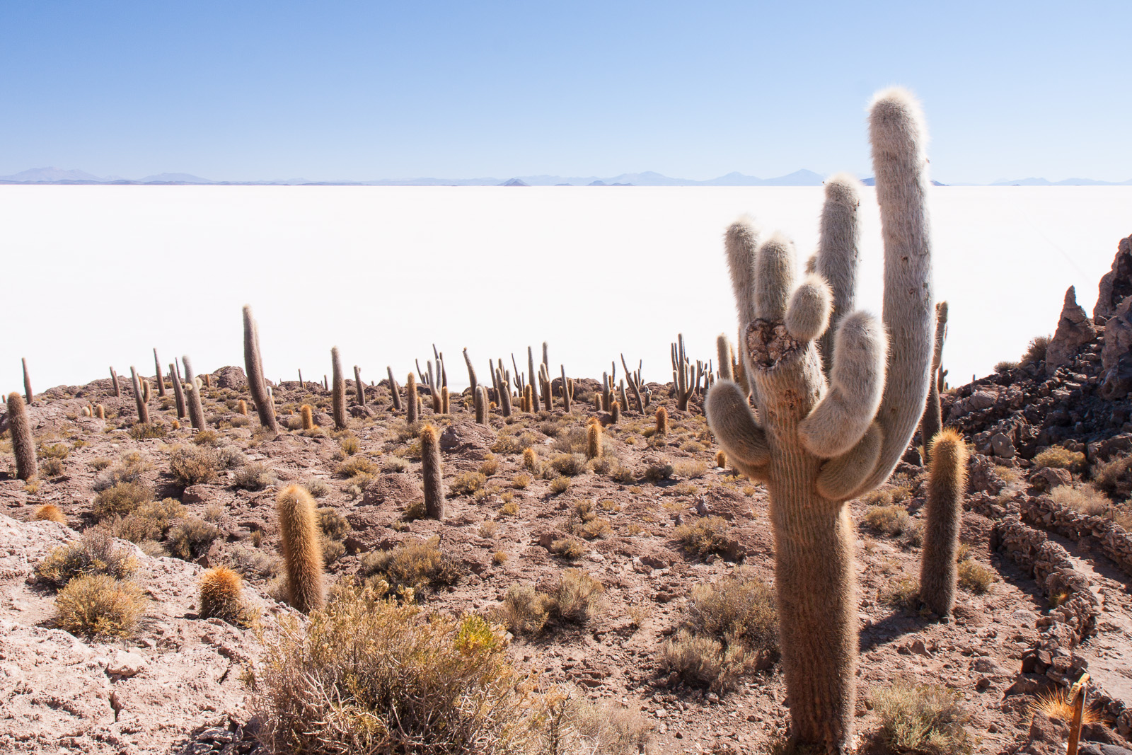 This is Isla Incawasi, a refuge for cacti that, despite the high salt content and lack of water continue to grow at a rate of 2.5 cm per year.