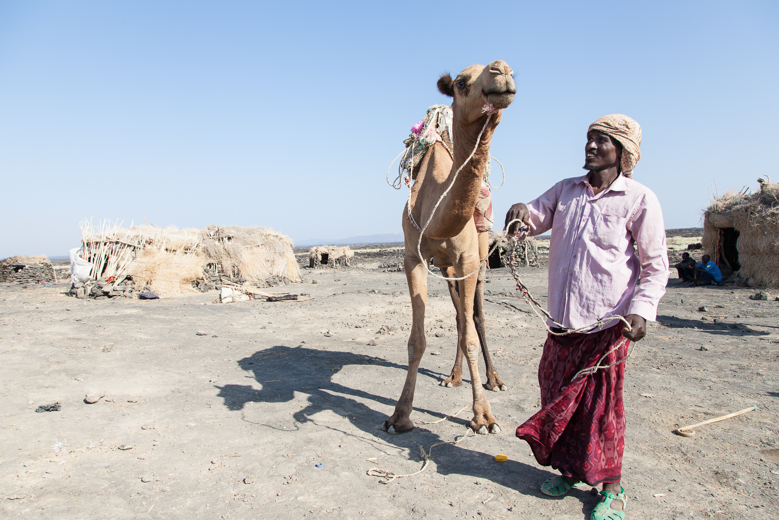 Camels are a critical part of the Afar way-of-life and so get treated with love and care. [Click to enlarge!]