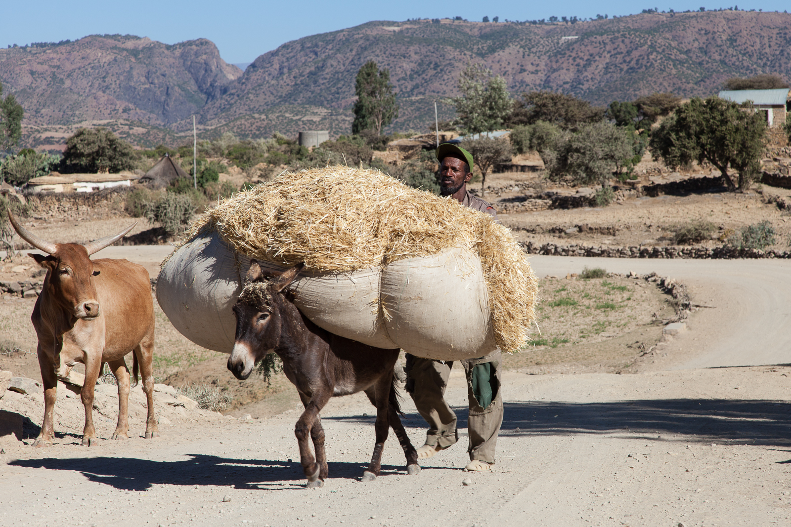 The signs of agriculture can be seen everywhere in Tigray. [Click to enlarge!]