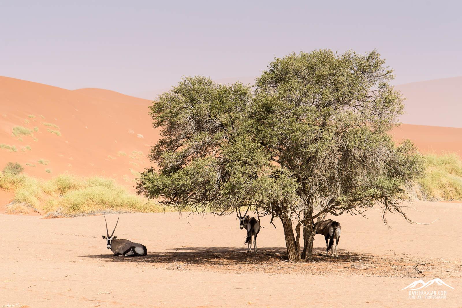 Oryx 1600px