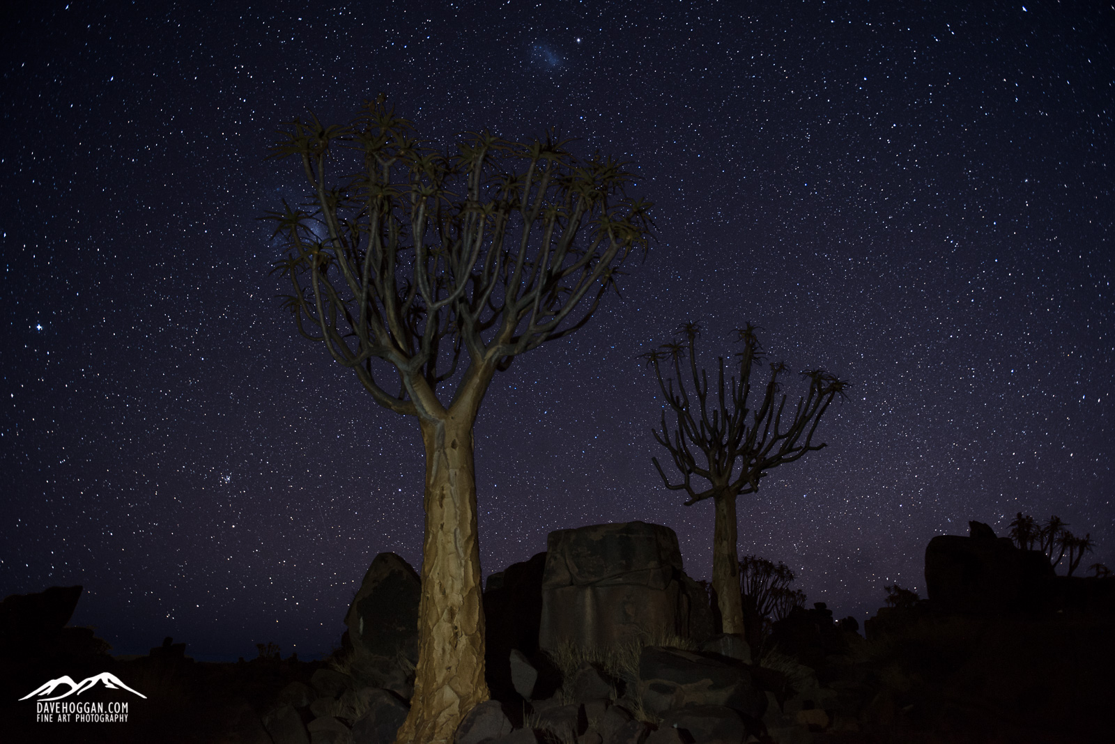 Silhouetted against an impossibly starry sky, quiver tress watch as the Large and Small Magellanic Clouds galaxies pass overhead.